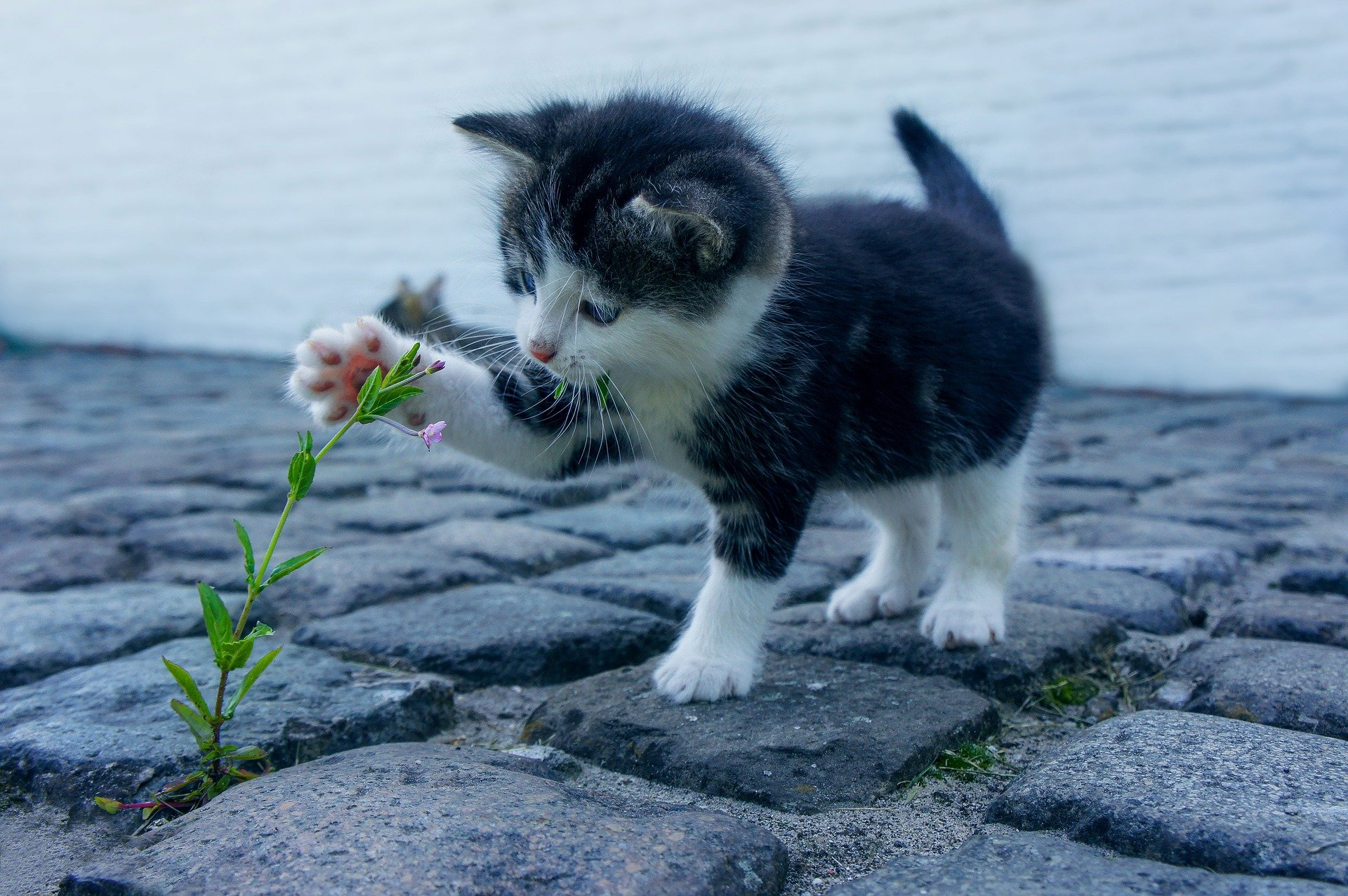 kitty playing with a follower