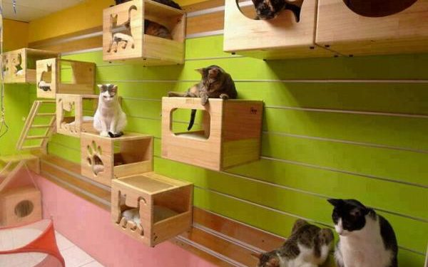 Best Cat Houses for Your Feline 2019