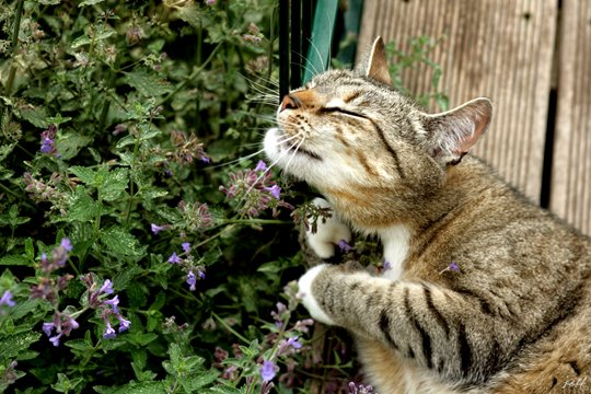 Best Catnip for your Cat