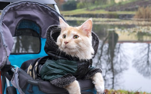 Top 10 Best Rated Cat Stroller