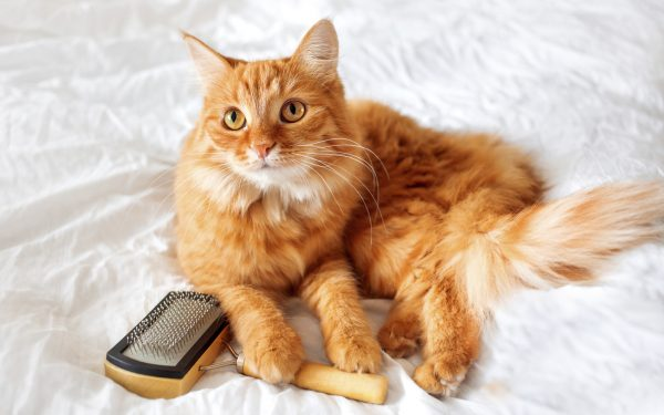 A complete buyers guide for Best Cat Brush in 2020