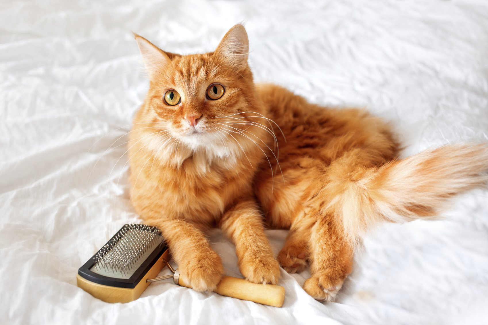 the best dry cat food for diabetic cats