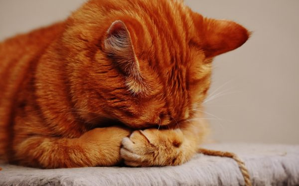 Best Dry Cat Food for Allergies( Review & Buying Guide) In 2020