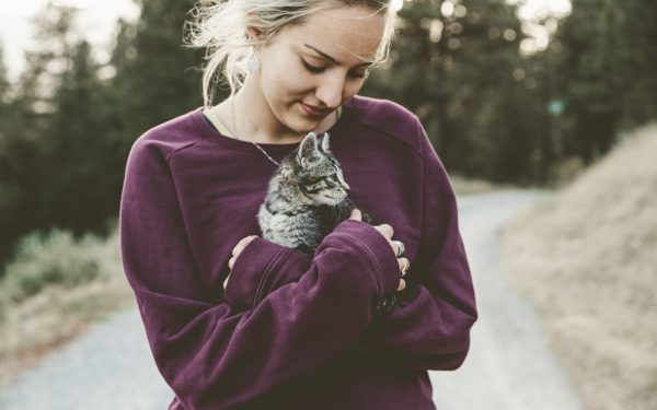 How to Determine the Sex of a Kitten?