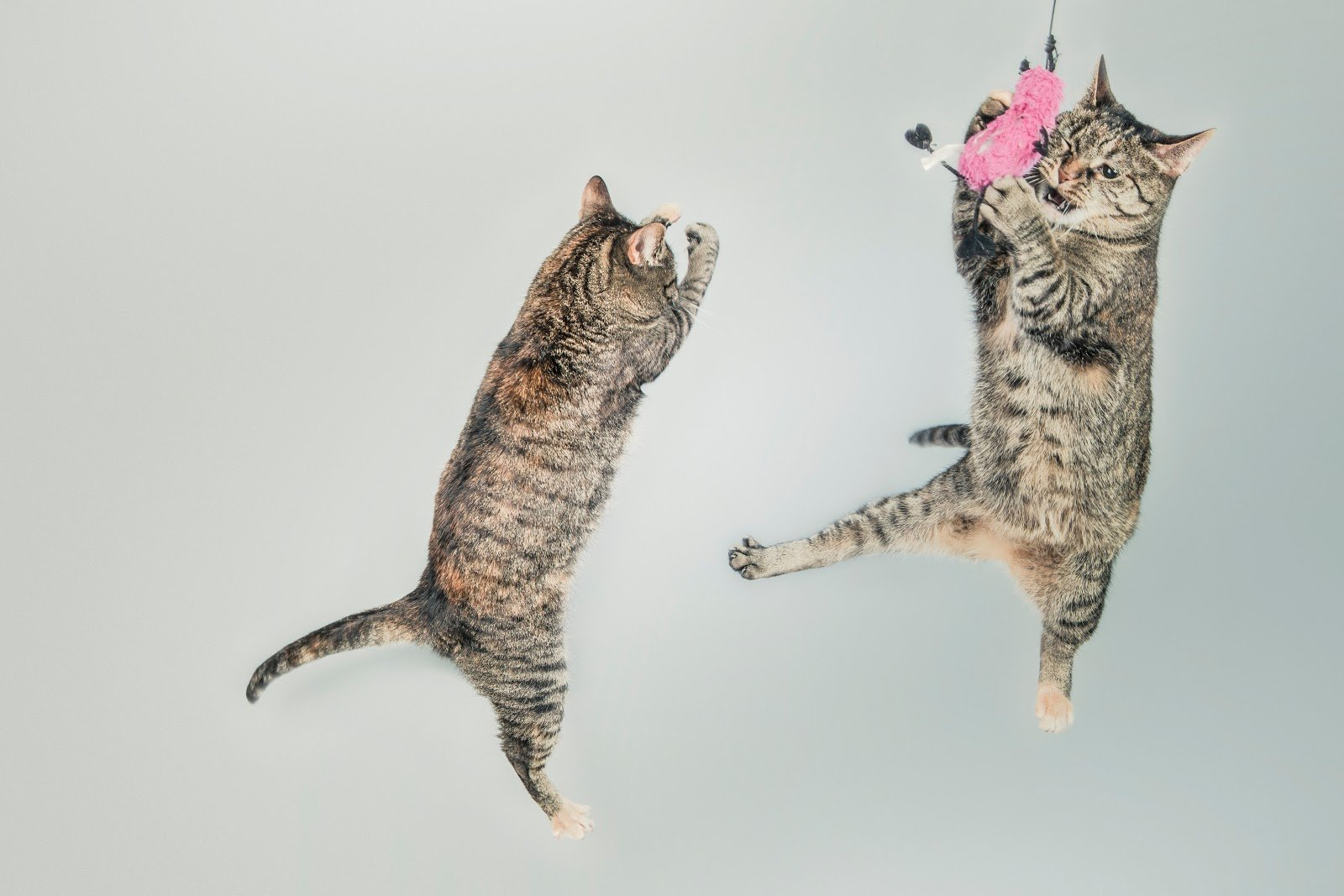 How High Can Cats Jump and Fall Safely?