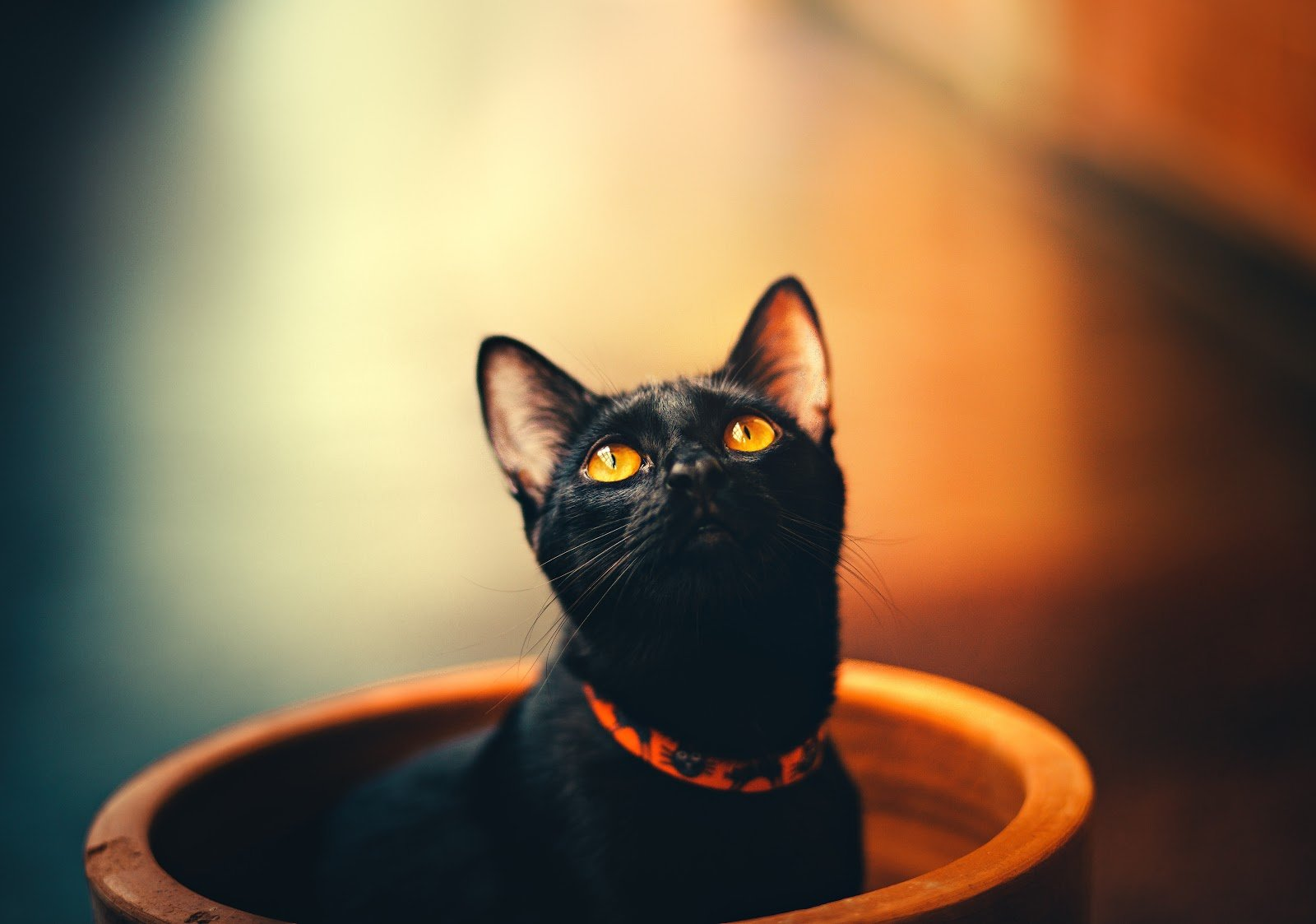 Names for Black Cats