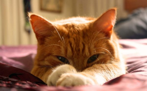 Orange Cat Names You Can Give Your Feline Family