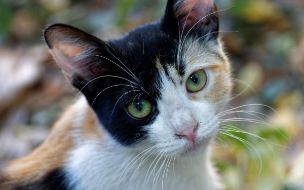 Calico Cat Name You Will Grow Fond Of