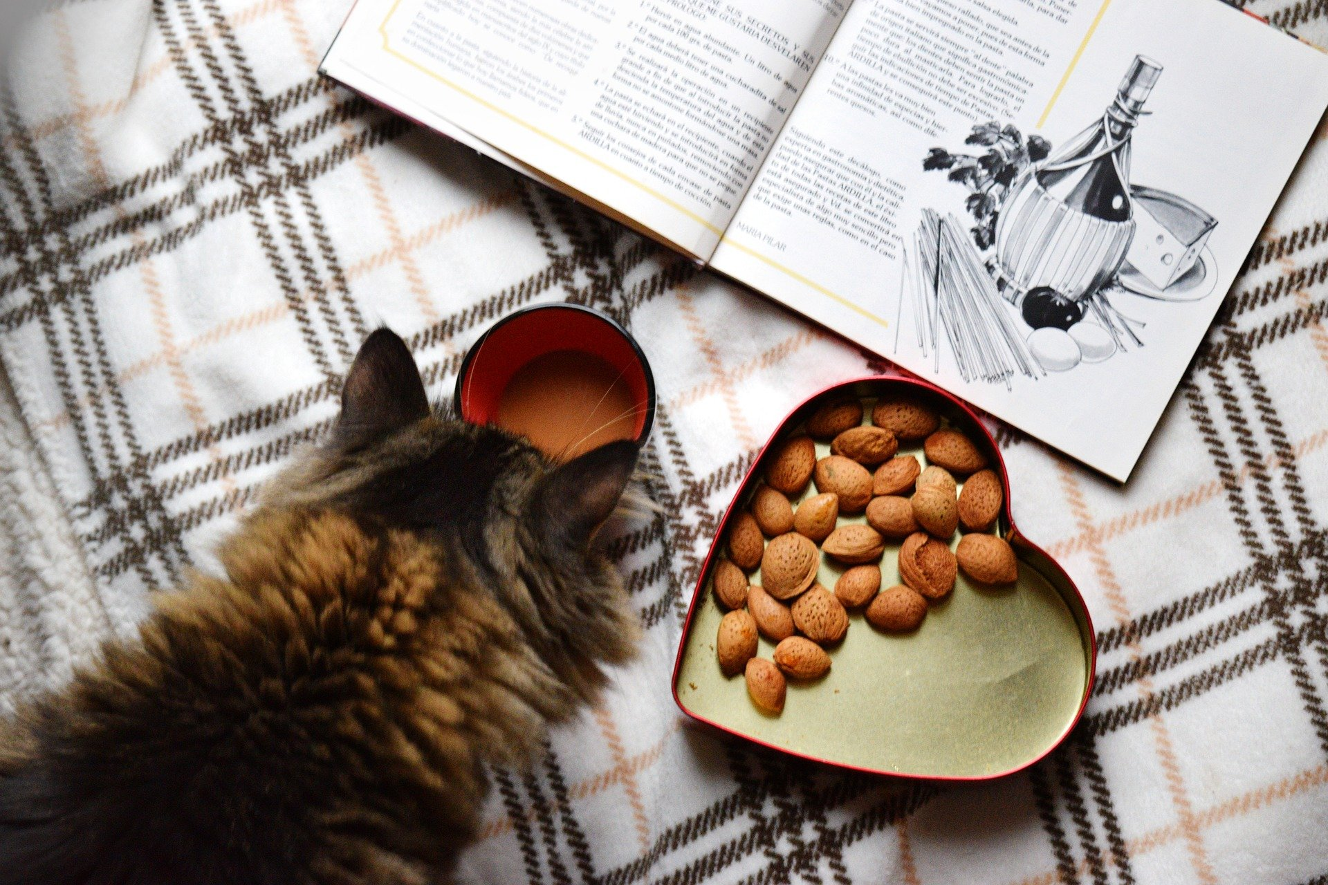 What are the Best Cat Foods for Cats?