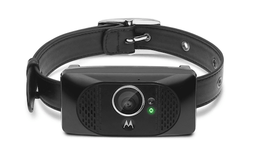 best cat collar camera