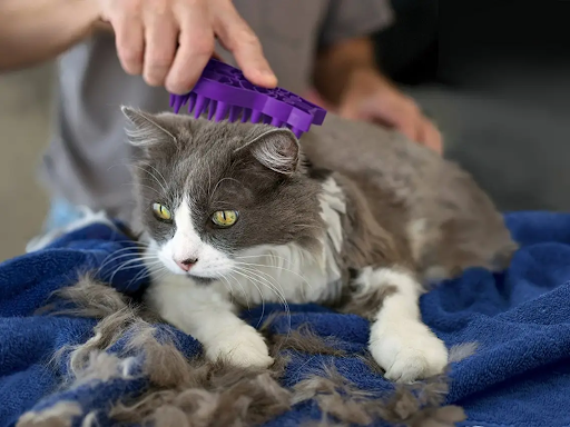 best cat brush for short hair