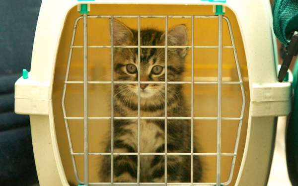 8 Interesting and Best Cat Carrier For Car Travel – A Great Guide!