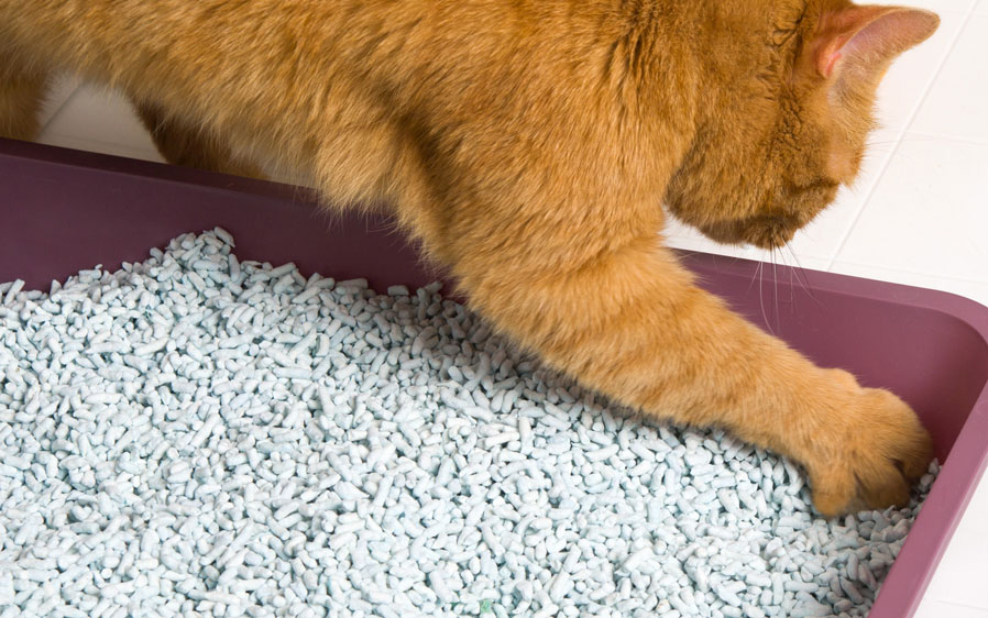 25 Best Cat Litter Reviews & Buying Guide 2020