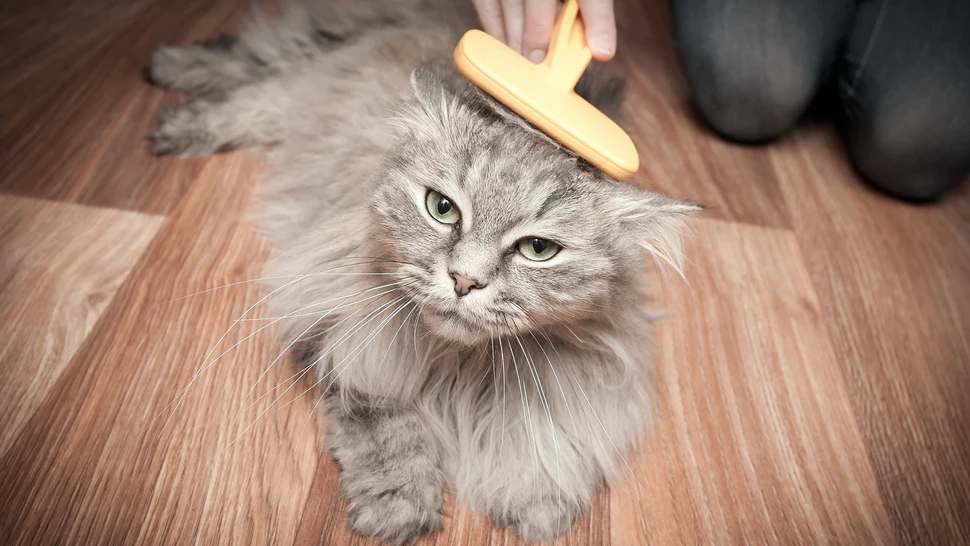8 Best Cat Brush For Long Hair – Informative Buying Guide!