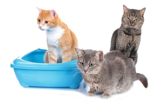 best cat litter box for multiple cats