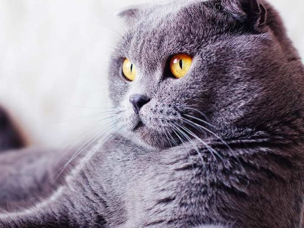 10 Best Cat Breeds for Families
