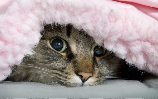 10 Best Cat Blankets