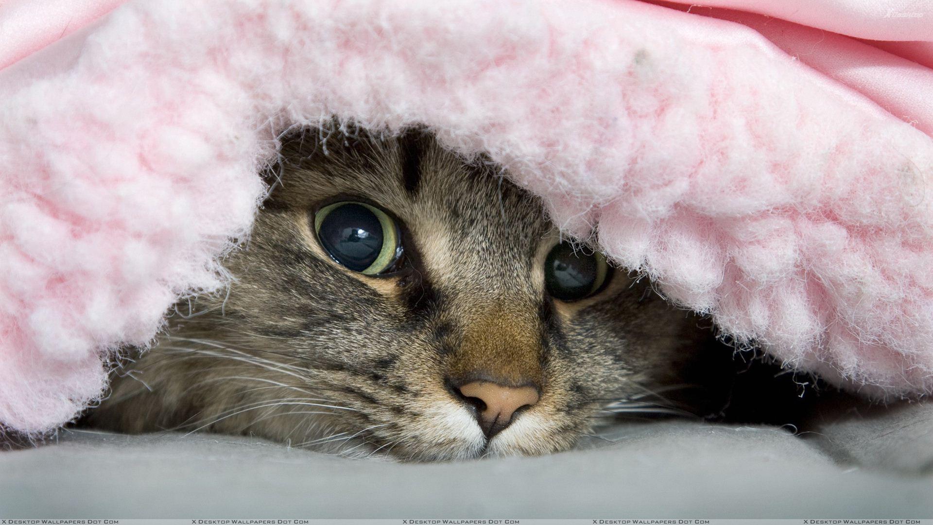 Best Cat Blankets