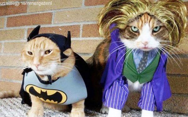 10 Best Cats Funny Dresses