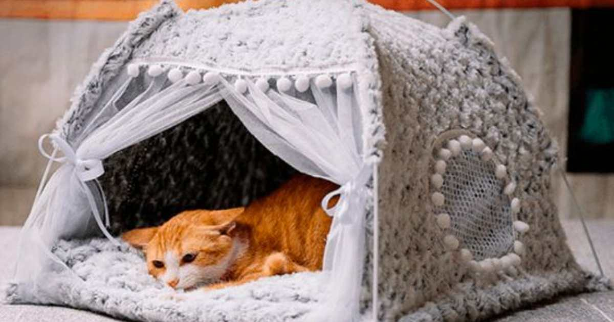 10 Best Cat Tents